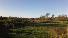 Campo en San Carlos